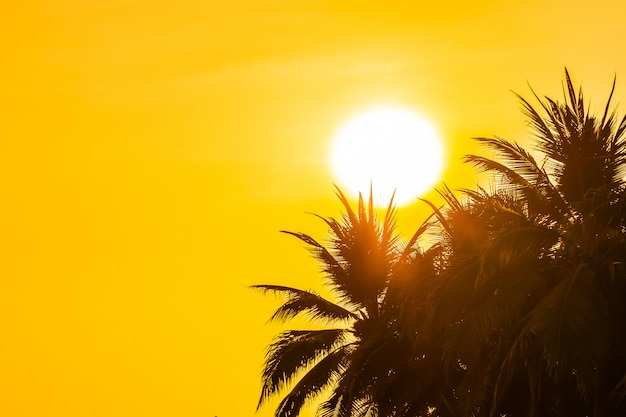 Beautiful outdoor nature with sky and sunset or sunrise around coconut palm tree Free Photo