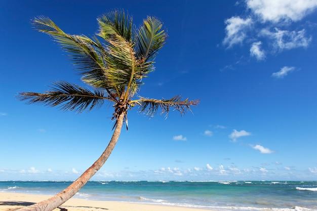 Красивая пальма на карибском пляже летом Бесплатные Фотографии