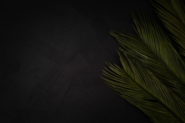 Beautiful palms on black with copyspace Free Photo