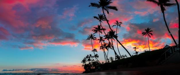 背の高いヤシの木と空に広がる息を呑むような赤と紫の雲の美しいパノラマ 無料写真