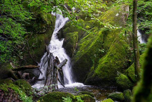 水の美しいパノラマビューは、夏、ghyllフォース、アンブルサイド、湖水地方国立公園、英国の緑の森の風景を落ちる Premium写真
