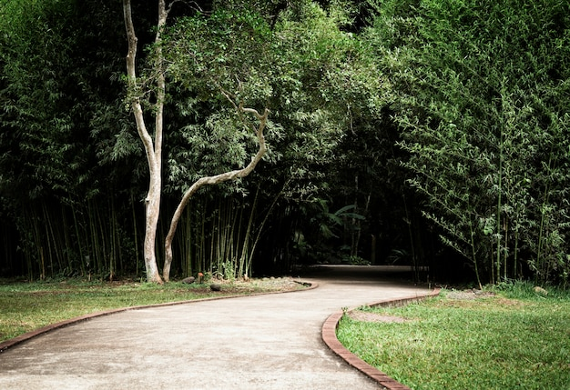 Beautiful park with trees and alley Free Photo