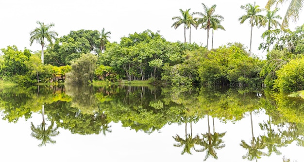 Beautiful park with tropical nature and palms Premium Photo