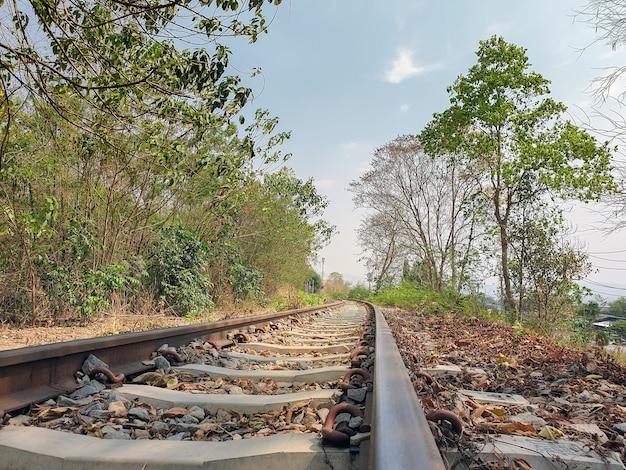 Beautiful photo of railway tracks in forest Premium Photo