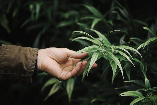 녹지에 대한 녹색 잎을 들고 여성 손의 아름다운 그림 무료 사진