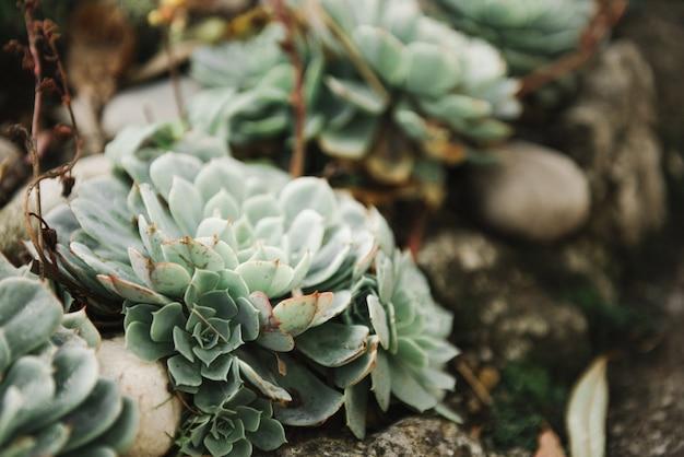 砂の中のさまざまなサボテンの美しい写真 無料写真