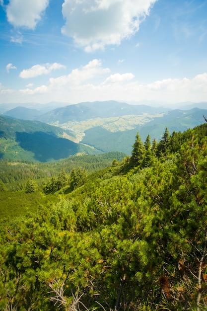 Bellissimi alberi di pino sulle montagne Foto Gratuite