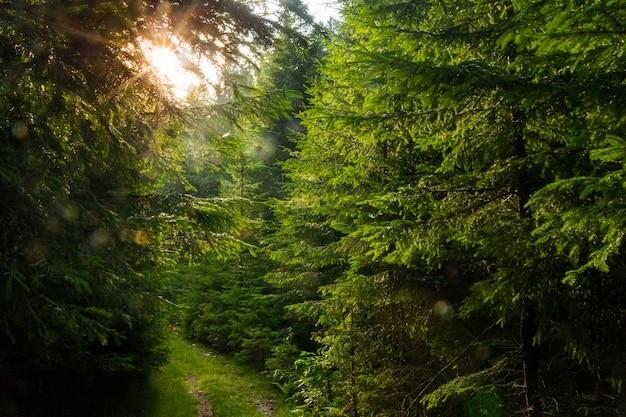 Красивые сосны в горах Бесплатные Фотографии