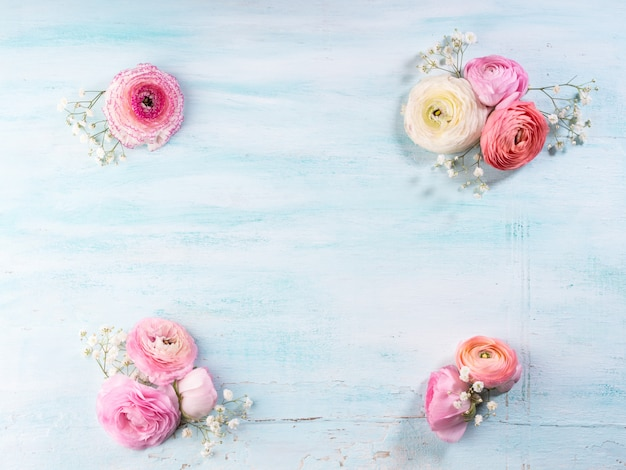Beautiful pink buttercup frame on turquiose wooden background. Premium Photo