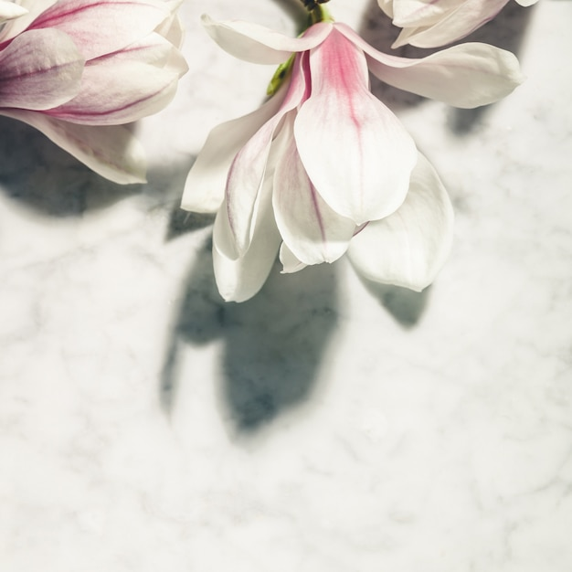 Beautiful pink magnolia flowers on white marble table. top view. flat lay. spring minimal concept. Premium Photo