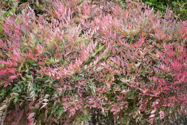 美しいピンクの植物 無料写真
