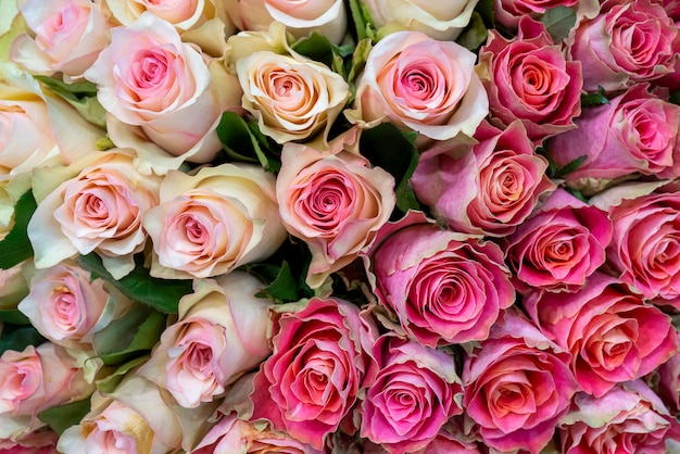 Beautiful pink roses for wedding and engagement. Premium Photo