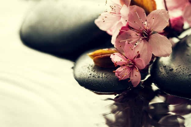 Beautiful pink spa flowers on spa hot stones on water wet background. side composition. copy space. spa concept. dark background. Free Photo