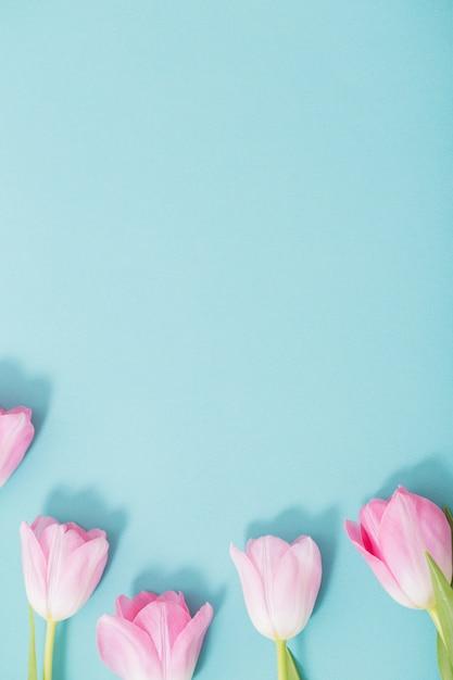 Красивые розовые тюльпаны на синем фоне Premium Фотографии