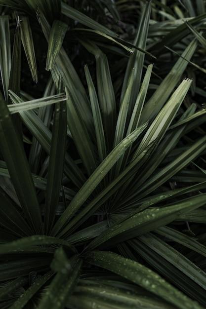 A beautiful plant closeup Free Photo