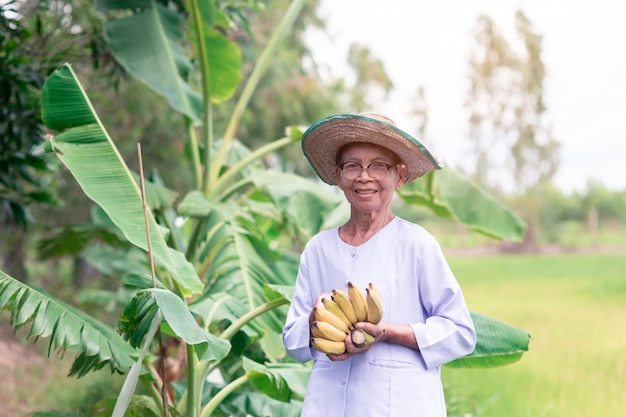 Beautiful portrait of smile  asian farmer elderly woman with holding brunch of ripe bananas Premium Photo