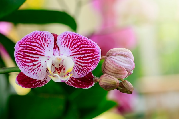 Beautiful purple orchid flowers in the garden. Premium Photo