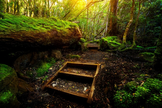 Beautiful rainforest jungle in tasmania, australia Premium Photo