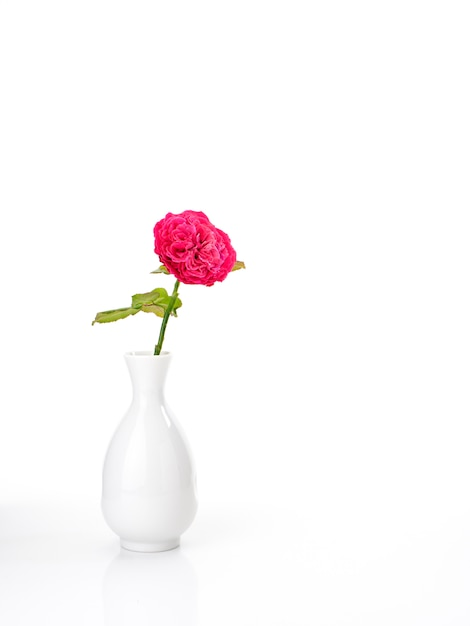 Beautiful red roses in white vase on white Premium Photo