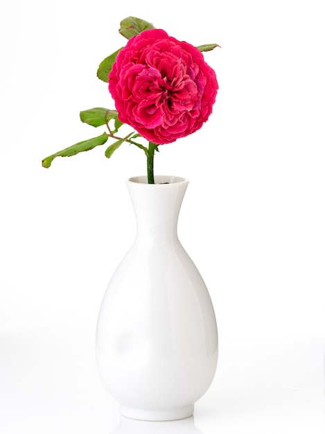 Beautiful red roses in white vase on white Premium Photo
