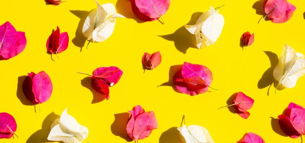 Beautiful red and white bougainvillea flower on yellow background. Premium Photo