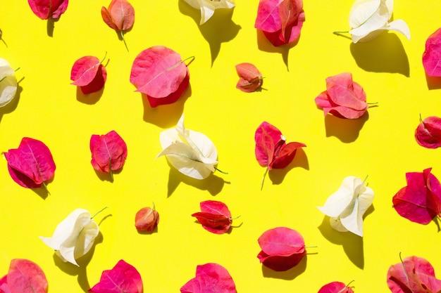 Beautiful red and white bougainvillea flower on yellow Premium Photo