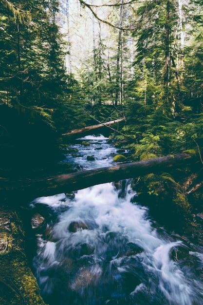 Bellissimo fiume con una forte corrente nei boschi Foto Gratuite