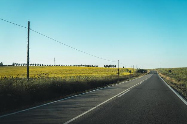 Красивая дорога, идущая через покрытое травой поле и ферму, полную желтых цветов Бесплатные Фотографии