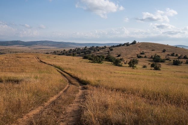Beautiful road going through the fields under the blue sky in kenya Free Photo