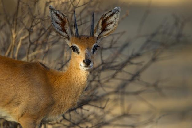 Beautiful roe deer near the trees Free Photo