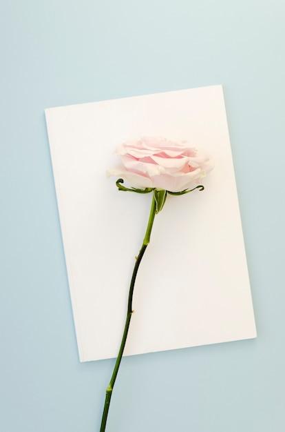 Beautiful rose on empty card Free Photo