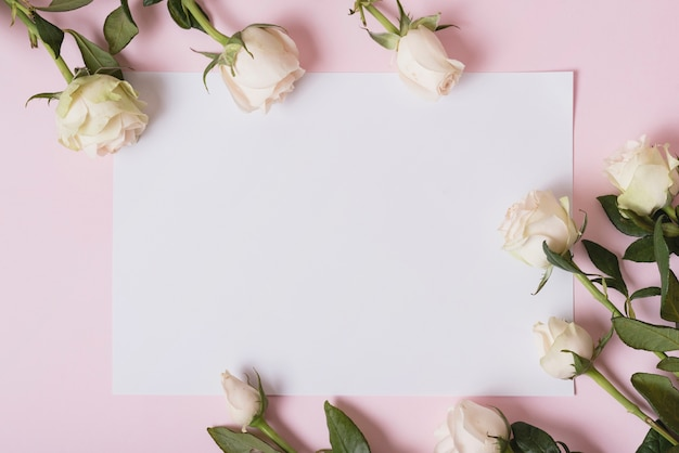 Beautiful roses on blank paper against pink background Premium Photo