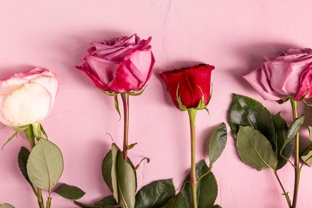 Beautiful roses in flat lay Free Photo