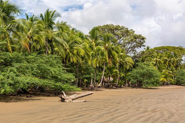 Splendido scenario di una spiaggia piena di diversi tipi di piante verdi a santa catalina, panama Foto Gratuite