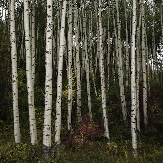 Uno splendido scenario di una foresta piena di alti alberi e altri tipi di piante Foto Gratuite