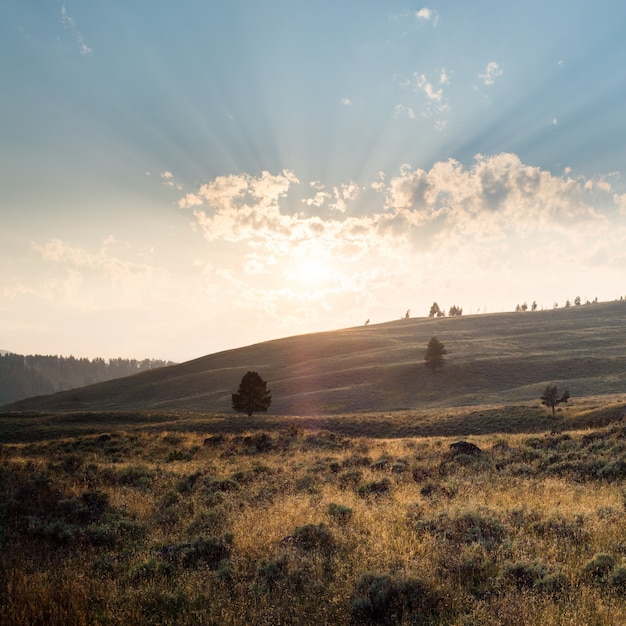 Beautiful scenery of a landscape in yellowstone with mountains and the sunrise Free Photo