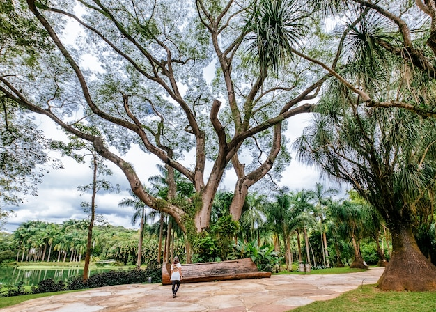 Beautiful scenery of the mangal das garcas park in the city of belem in brazil Free Photo