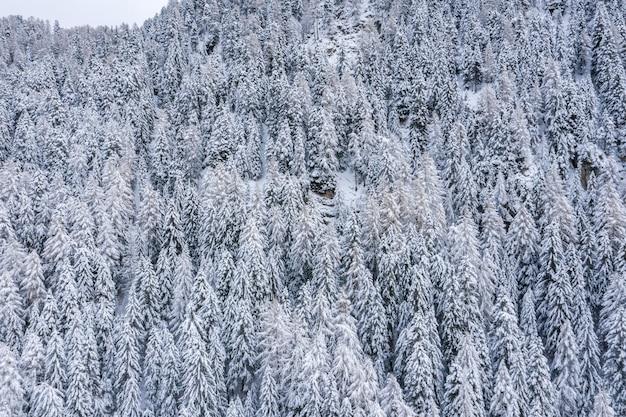 겨울에 눈 덮인 알프스의 숲의 아름다운 풍경 무료 사진