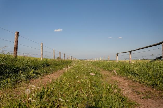 Красивые пейзажи зеленого поля в сельской местности в регионе эйфель, германия Бесплатные Фотографии