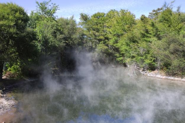 ニュージーランドの緑の木々に囲まれた温水プールの美しい風景 無料写真
