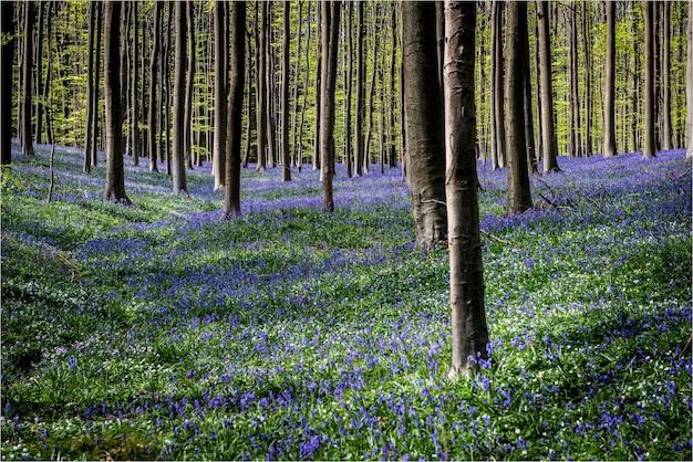 紫の花畑にたくさんの木々の美しい風景 無料写真