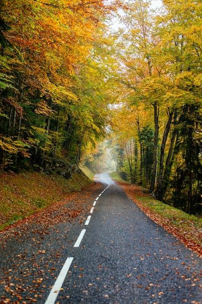 色とりどりの秋の木々がたくさんある森の中の道の美しい風景 無料写真
