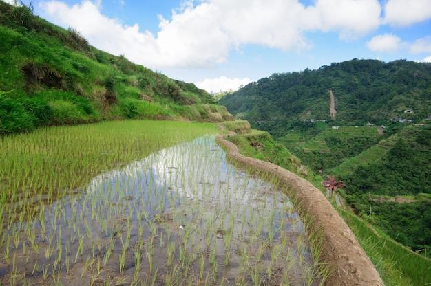 Красивые пейзажи рисовых террас банауэ, провинция ифугао, филиппины Бесплатные Фотографии
