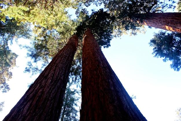 Красивые пейзажи лесных деревьев и зелени Бесплатные Фотографии