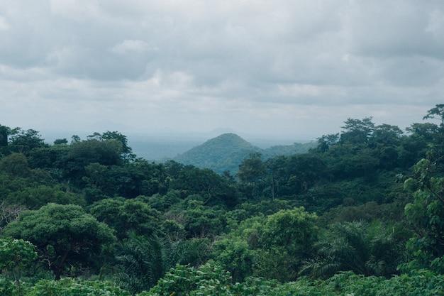曇り空の下で緑の木の森の美しい風景 無料写真