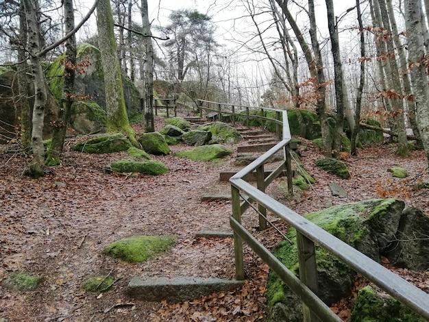 ノルウェー、ラルヴィークの森の真ん中に緑の木々の美しい風景 無料写真