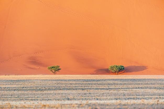 ナミビア砂漠、ソーサスフライ、ナミビアの砂丘の美しい風景 無料写真