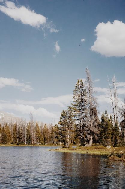 흐린 푸른 하늘 아래 언덕과 나무와 시골 자연의 아름다운 풍경 무료 사진