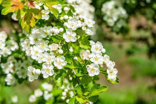 낮에는 들판에 하얀 벚꽃의 아름다운 풍경 무료 사진