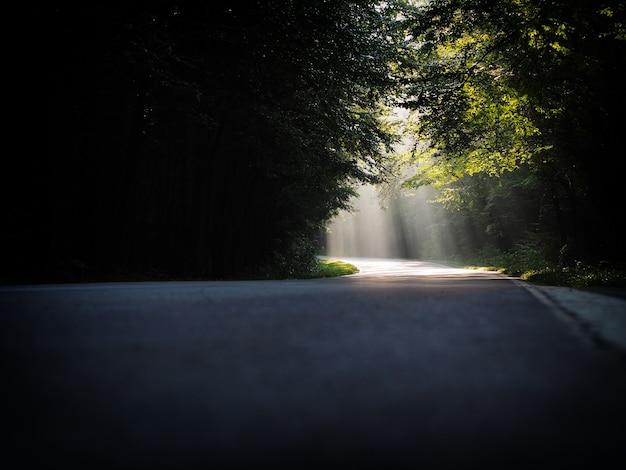 Splendido scenario di un percorso con raggi di sole luminosi che cadono attraverso una serie di alberi Foto Gratuite